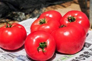 桃井農園トマト