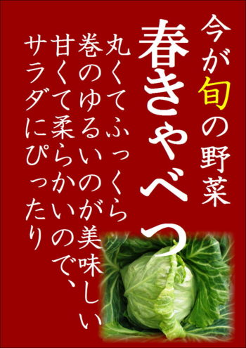 立夏が旬の野菜 春キャベツ