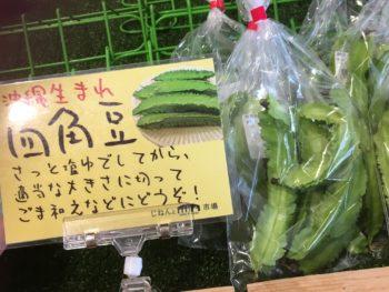 京都産 四角豆