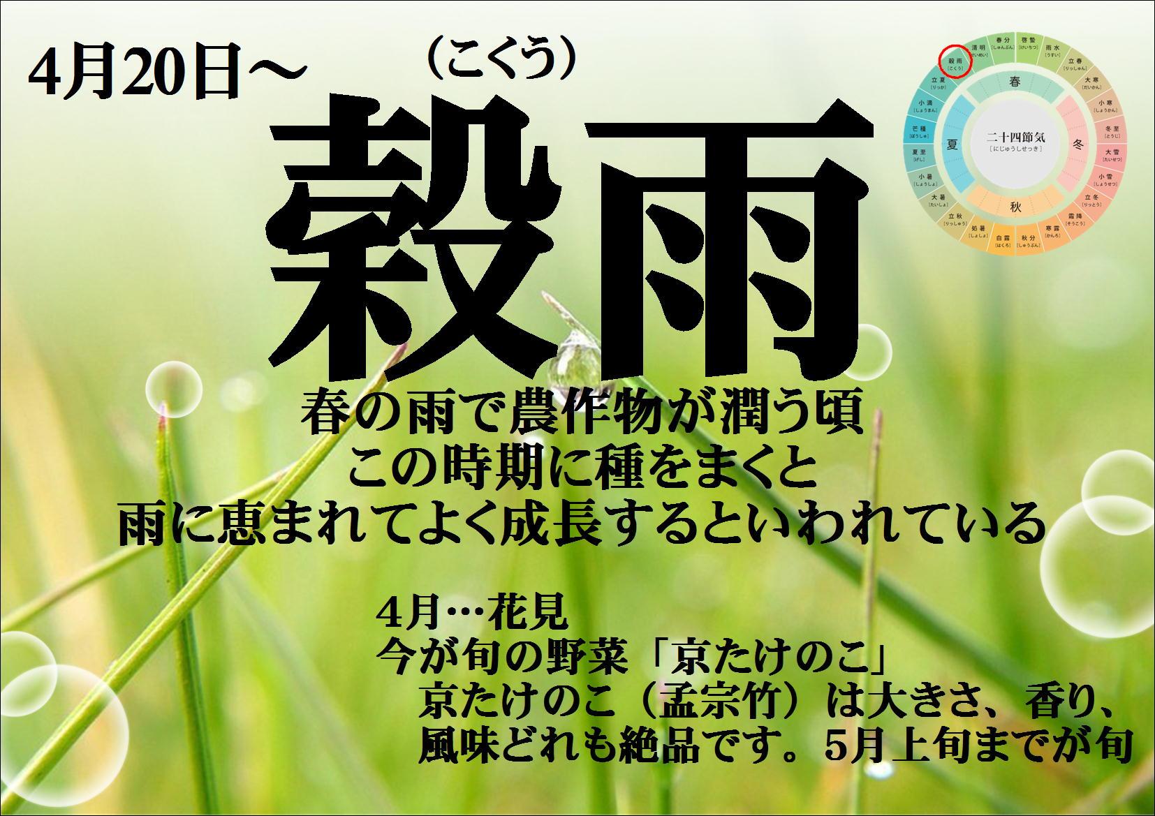 4/20(金)~5/4(日)は「穀雨(こくう)」です