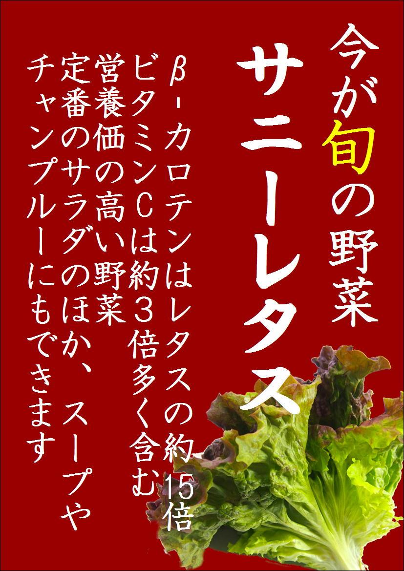 旬の野菜 「サニーレタス」