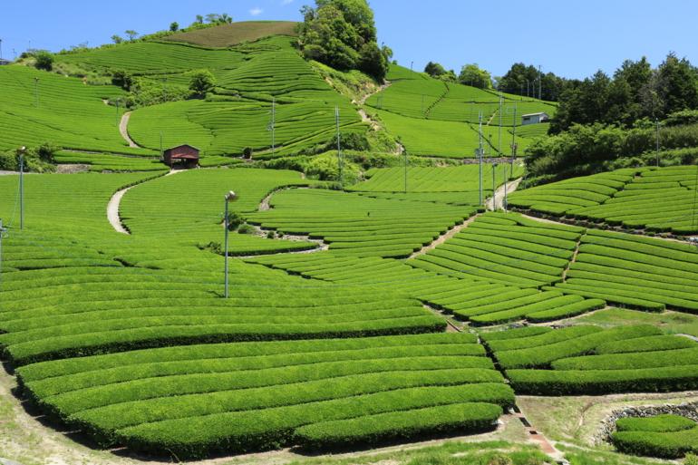 3月の毎週水曜日は「和束茶フェア」♪
